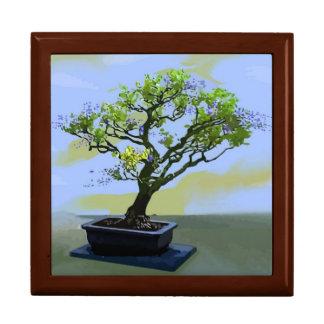 Arbre de bonsaïs de glycines grande boîte à bijoux carrée