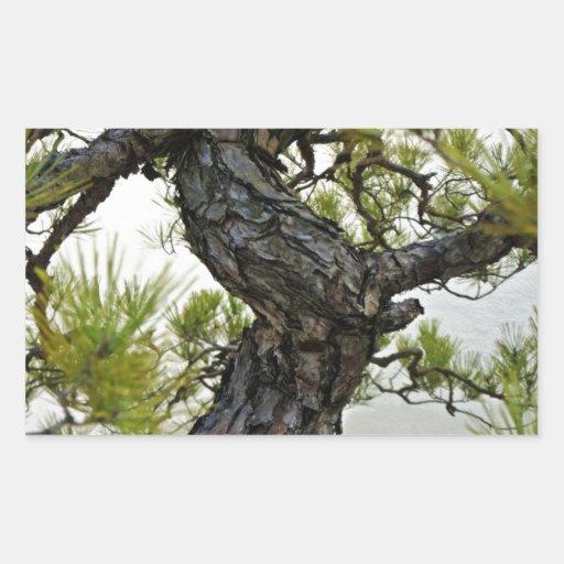 Arbre de bonsaïs de pin rouge japonais stickers en rectangle