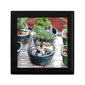 Arbre de bonsaïs petite boîte à bijoux carrée
