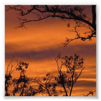 Arbre de coucher du soleil impression photo