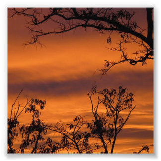 Arbre de coucher du soleil photographies
