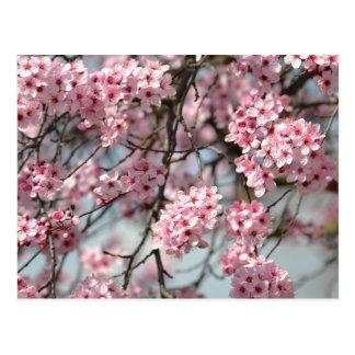 Arbre de fleurs de cerisier carte postale
