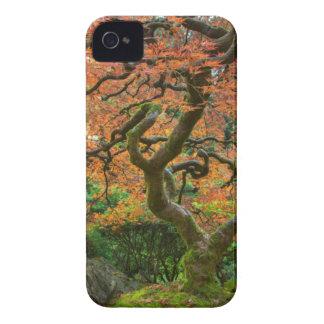 Arbre d'érable aux jardins de Japonais en automne Coques iPhone 4 Case-Mate