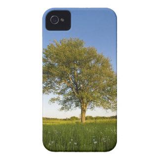 Arbre d'érable solitaire dans le domaine de foin à coques iPhone 4