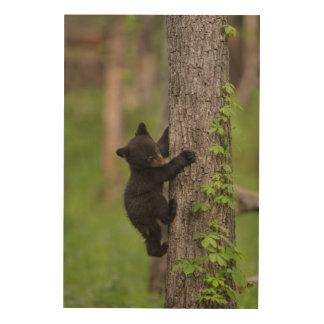 Arbre d'escalade de CUB d'ours noir Impression Sur Bois