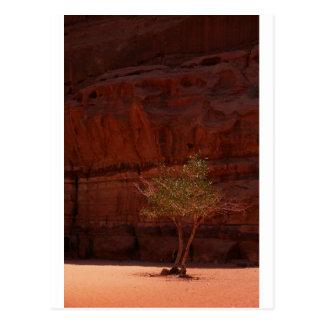 Arbre en carte postale de désert de rhum de Wadi