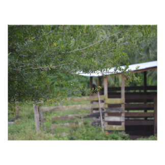 arbre et vieille photo de la Floride de grange Prospectus 21,6 Cm X 24,94 Cm
