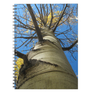 Arbre grand de tremblement Aspen Carnets