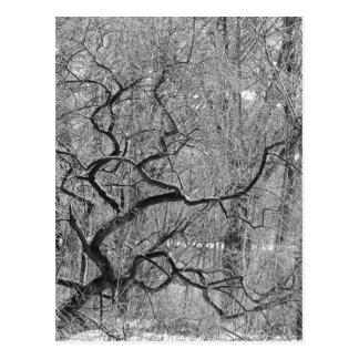 arbre noir et blanc carte postale