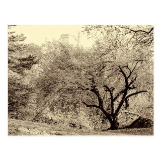 Arbre noir et blanc d'hiver de paysage dans le cartes postales