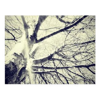 Arbre noir et blanc nu cartes postales