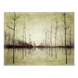 Arbre rural d'hiver de paysage de prairie de pays cartes postales