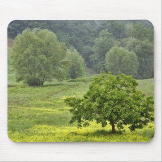 Arbre simple dans le domaine agricole de ferme, To Tapis De Souris