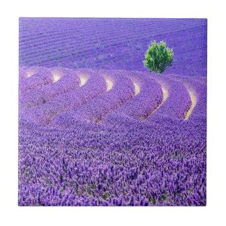 Arbre solitaire dans le domaine de lavande, France Carreau