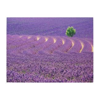 Arbre solitaire dans le domaine de lavande, France Impression Sur Bois
