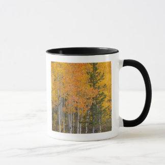 Arbres 7 de rivière et de tremble de Provo Mug