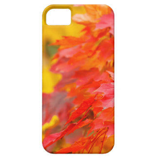 Arbres avec le feuille orange et jaune en automne coque iPhone 5 Case-Mate