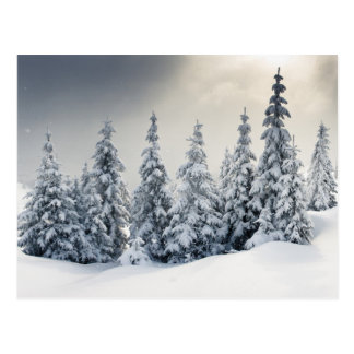 Arbres couverts de gelée et de neige carte postale