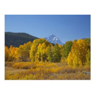 Arbres d'Aspen avec la gamme de montagne de Teton Carte Postale