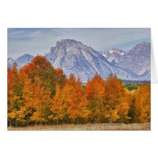 Arbres d'Aspen avec la gamme de montagne de Teton Cartes