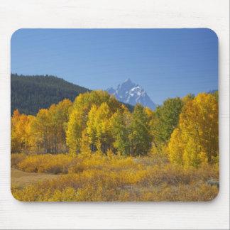 Arbres d'Aspen avec la gamme de montagne de Teton  Tapis De Souris