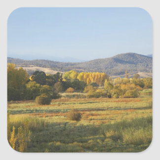 Arbres d'automne, Khancoban, montagnes de Milou, Sticker Carré