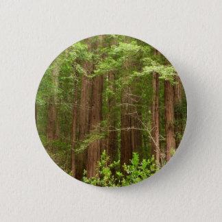 Arbres de séquoia au monument national en bois de badges