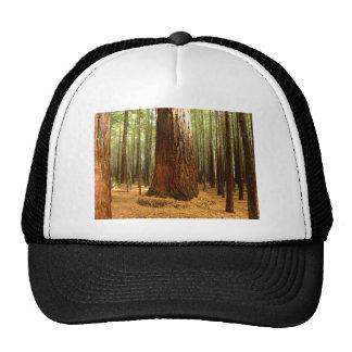 Arbres de séquoia casquettes de camionneur