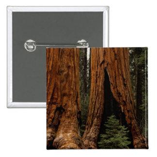 Arbres de séquoia, parc national de séquoia badges