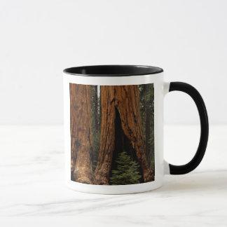 Arbres de séquoia, parc national de séquoia mug
