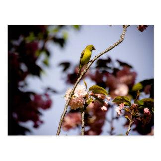 Arbres des oiseaux cartes postales