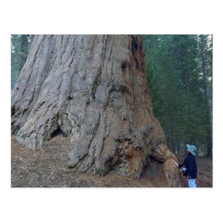 Arbres Giants de séquoias Cartes Postales