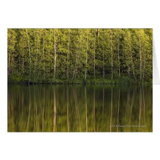 Arbres reflétés dans l'eau cartes