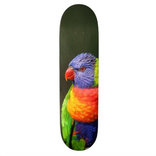 Arc-en-ciel Lorikeet Skateboards Cutomisables