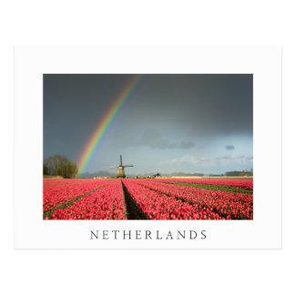 Arc-en-ciel, tulipes et carte postale de Pays-Bas