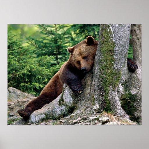 """""""ARRÊT IMPRESSION"""" de repos d'ours de Brown Affiches"""