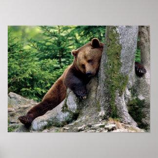 """""""ARRÊT IMPRESSION"""" de repos d'ours de Brown Posters"""