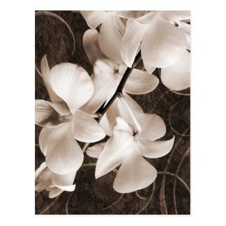 Arrière - plan blanc de noir de sépia de fleur carte postale