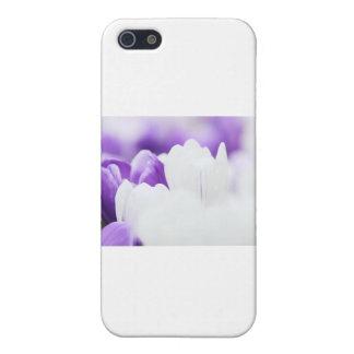 Arrière - plan de fleur pourpre et blanche étui iPhone 5
