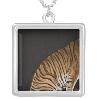 Arrière saison de tigre se reposant sur la collier