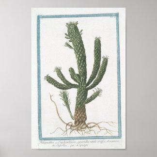 """Art botanique d'affiche de cactus vintage (8"""" posters"""
