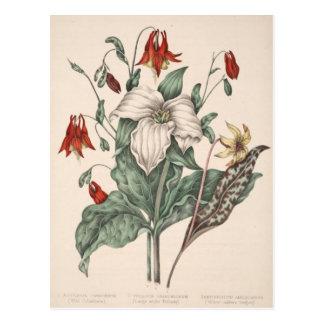 Art botanique vintage carte postale