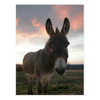 Art d'âne carte postale