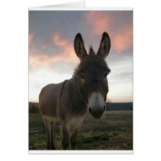 Art d'âne cartes