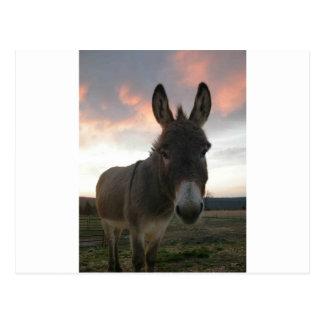 Art d'âne cartes postales