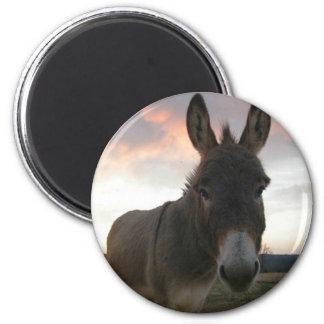 Art d'âne magnet rond 8 cm