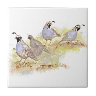 Art de nature d'oiseau de cailles de Californie Carreau