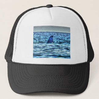 ART DU QUEENSLAND AUSTRALIE DE QUEUE DE BALEINE DE CASQUETTE