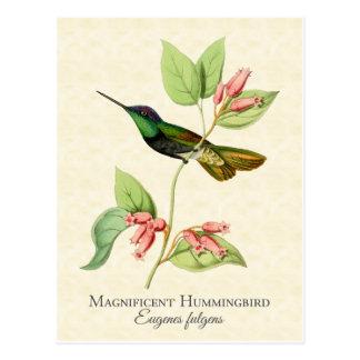 Art magnifique de cru de colibri cartes postales