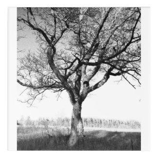 Art Mural En Acrylique Beau vieil arbre dans le Lake Placid NY